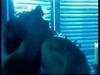 Johnny Hallyday - Ne M'Oublie Pas