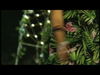 Akwid - Ombligo A Ombligo (feat. Los Tucanes De Tijuana)