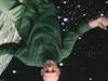 Midnight Oil - Best Of Both Worlds