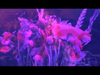 Erik Hassle - Dont Bring Flowers - Crystal Fighters Remix