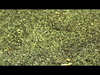 2raumwohnung - Wir werden sehen - Paul Kalkbrenner Remix