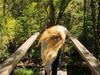 Dominant Legs - Hoop Of Love