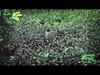 Hello Seahorse! - Un Año Quebrado (Video Oficial)