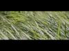 E L E N K A - Schmetterling (Original Version)
