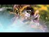 bEEdEEgEE - Flowers (edit) (feat. Lovefoxxx)