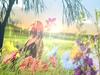 Catherine Britt - Little Wildflower