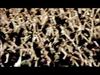 Muse - Knights Of Cydonia: Live At Wembley Stadium 2007