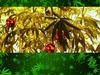 Los Marijuanos - Marijuana Tree (Explicit)