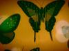 Annie Lennox - Apatura Iris