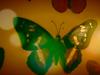 Annie Lennox - Papilio Machaon